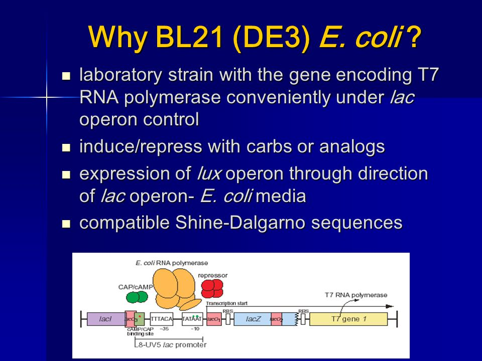 Why BL21 (DE3) E.coli .