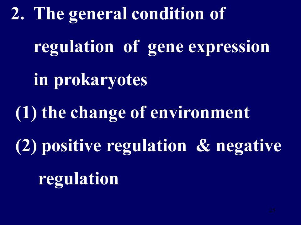 24 B 、 葡萄糖 , cAMP , CAP- cAMP 复合物 结构基因表达 乳糖不被利用