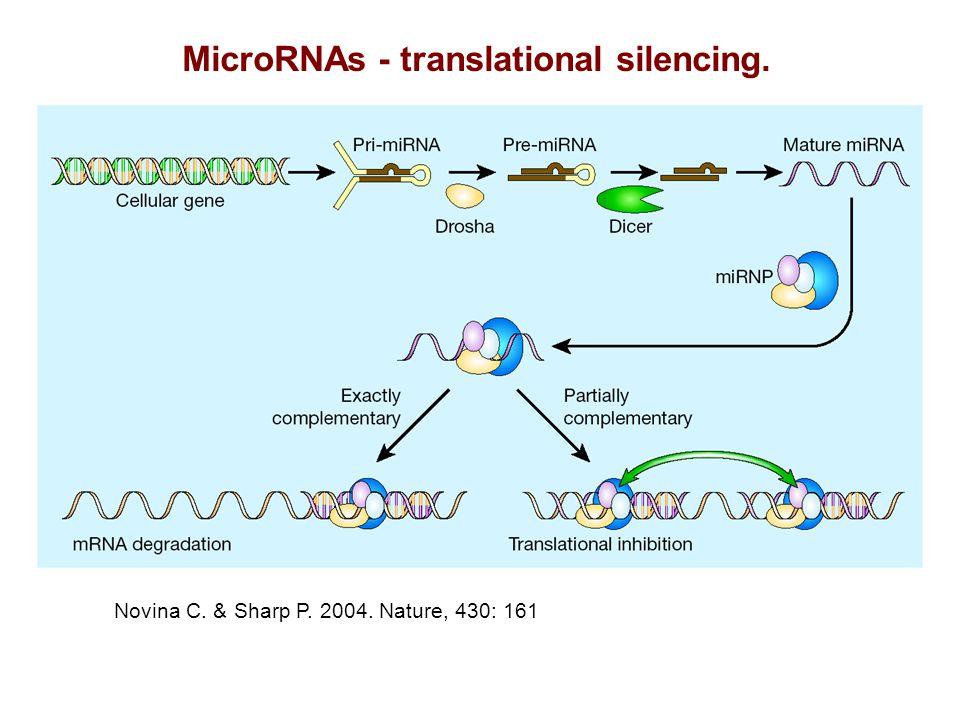 MicroRNAs - translational silencing. Novina C. & Sharp P. 2004. Nature, 430: 161