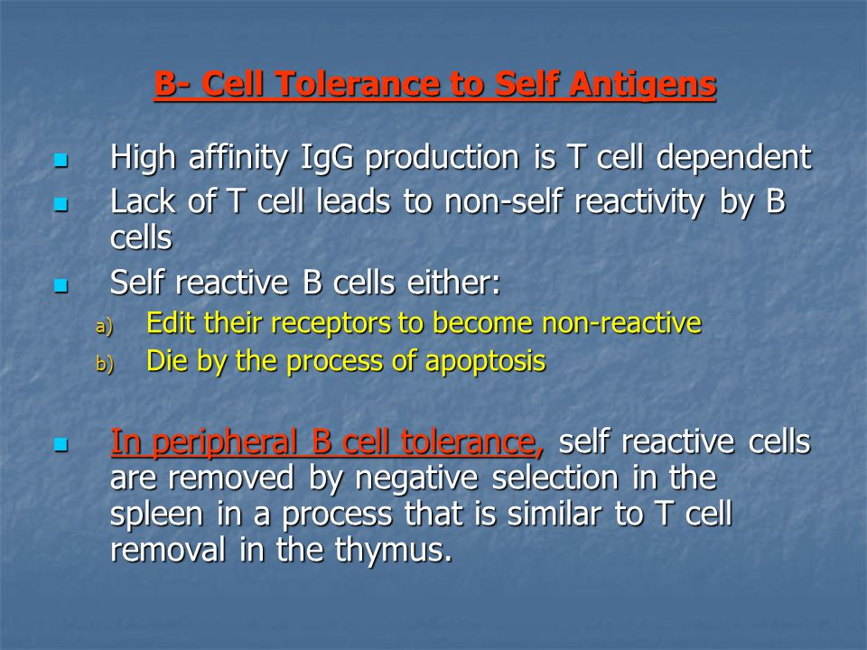 B- Cell Tolerance to Self Antigens High affinity IgG production is T cell dependent High affinity IgG production is T cell dependent Lack of T cell leads to non-self reactivity by B cells Lack of T cell leads to non-self reactivity by B cells Self reactive B cells either: Self reactive B cells either: a) Edit their receptors to become non-reactive b) Die by the process of apoptosis In peripheral B cell tolerance, self reactive cells are removed by negative selection in the spleen in a process that is similar to T cell removal in the thymus.