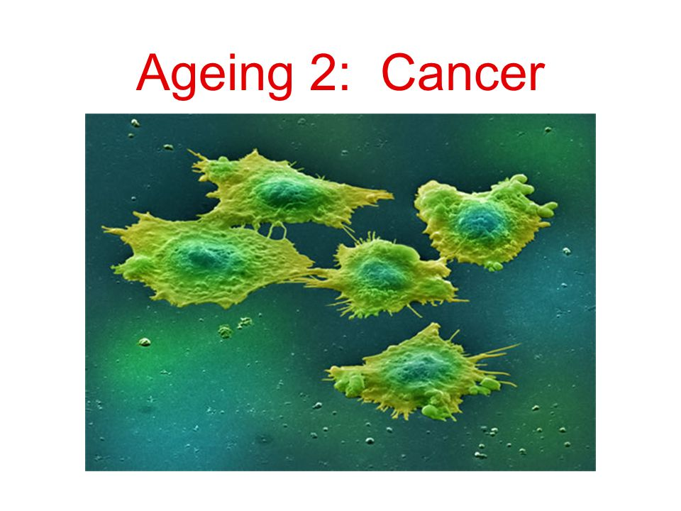 A hallmark of ageing and cancer is the increase of genomic instability with age Selection that acts to preserve genomic stability would diminish with age Somatic mutations (mutations in the body) accumulate with age ≠ mutational accumulation from previous lecture (heritable deleterious mutations that get expressed later in life  diseases expressed later in life)