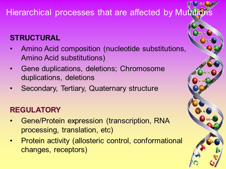 STRUCTURAL Amino Acid composition (nucleotide substitutions, Amino Acid substitutions) Gene duplications, deletions; Chromosome duplications, deletions Secondary, Tertiary, Quaternary structure REGULATORY Gene/Protein expression (transcription, RNA processing, translation, etc) Protein activity (allosteric control, conformational changes, receptors) Hierarchical processes that are affected by Mutations