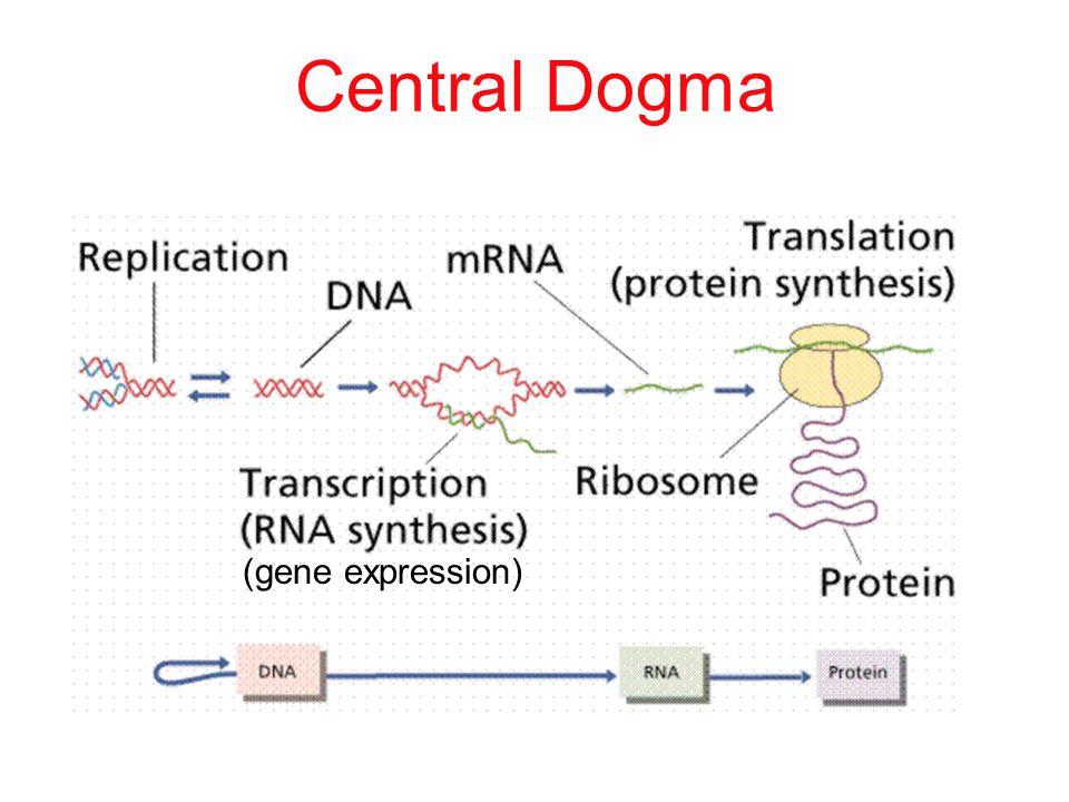 REGULATORY Gene/Protein expression Transcription: Mutations at promoters, enhancers, transcription factors, Histones/acetylation, etc.