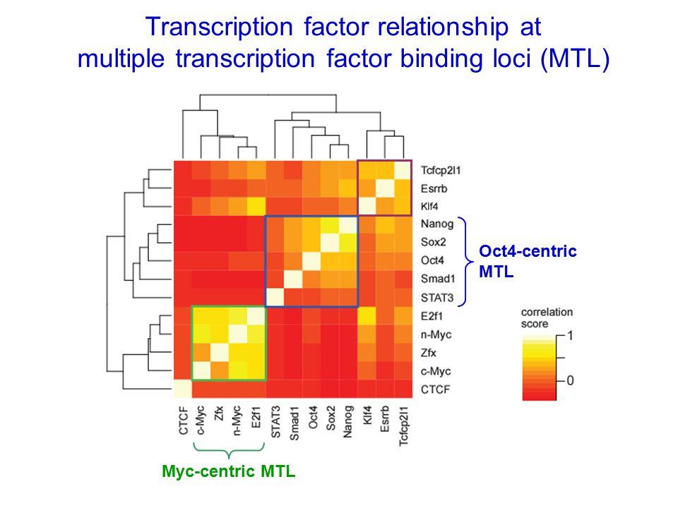 Transcription factor relationship at multiple transcription factor binding loci (MTL) Oct4-centric MTL Myc-centric MTL