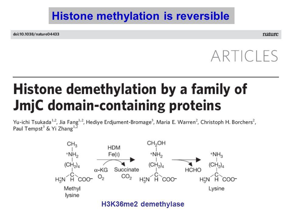Histone methylation is reversible H3K36me2 demethylase