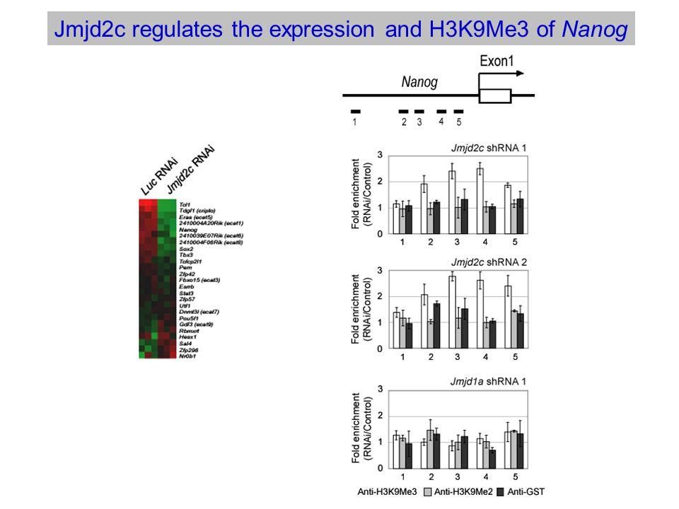 Jmjd2c regulates the expression and H3K9Me3 of Nanog