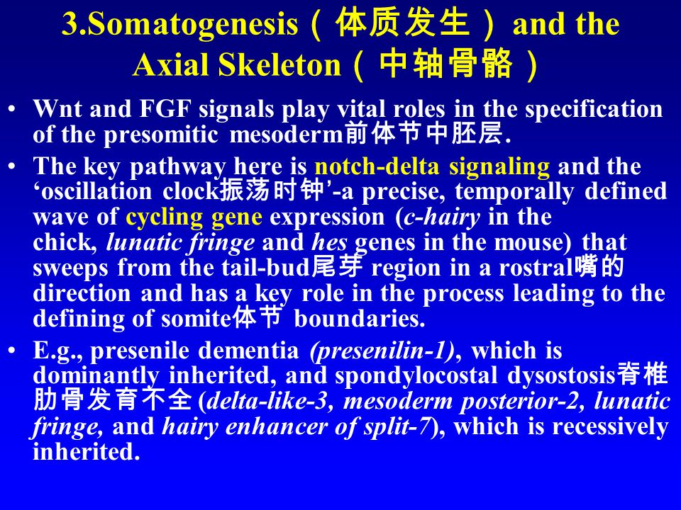 3.Somatogenesis (体质发生) and the Axial Skeleton (中轴骨骼) Wnt and FGF signals play vital roles in the specification of the presomitic mesoderm 前体节中胚层.