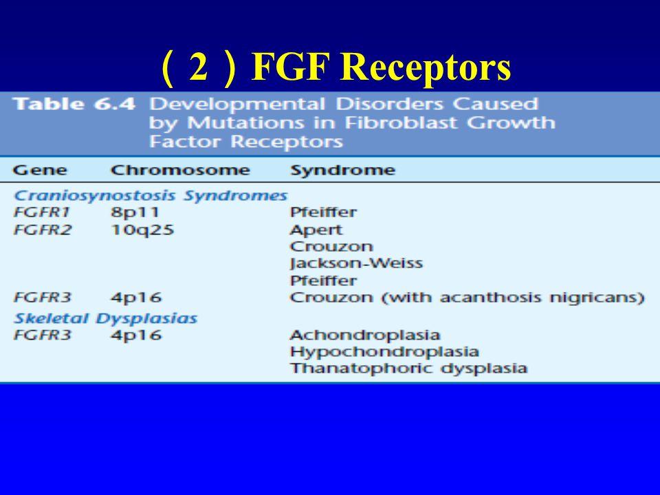 ( 2 ) FGF Receptors