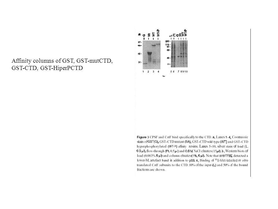 Affinity columns of GST, GST-mutCTD, GST-CTD, GST-HiperPCTD