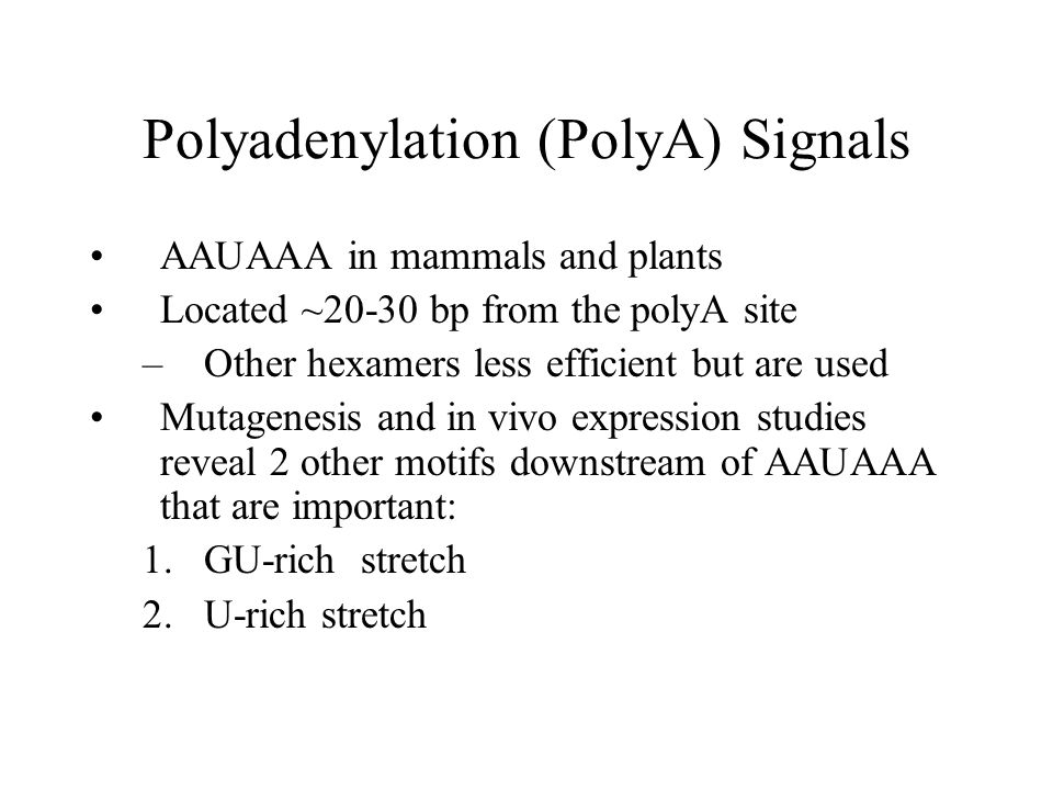 Polyadenylation (PolyA) Signals AAUAAA in mammals and plants Located ~20-30 bp from the polyA site –Other hexamers less efficient but are used Mutagenesis and in vivo expression studies reveal 2 other motifs downstream of AAUAAA that are important: 1.GU-rich stretch 2.U-rich stretch