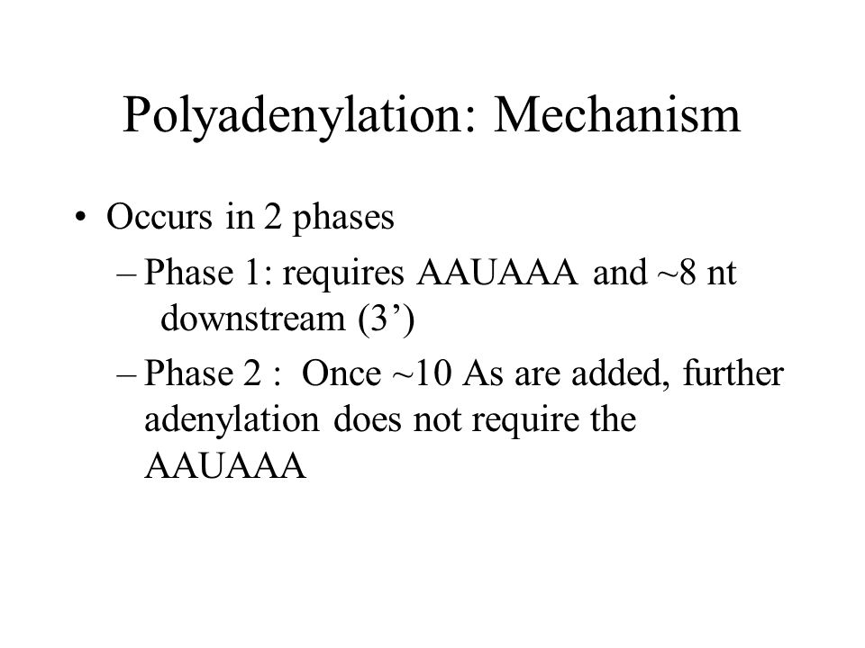Polyadenylation: Mechanism Occurs in 2 phases –Phase 1: requires AAUAAA and ~8 nt downstream (3') –Phase 2 : Once ~10 As are added, further adenylation does not require the AAUAAA