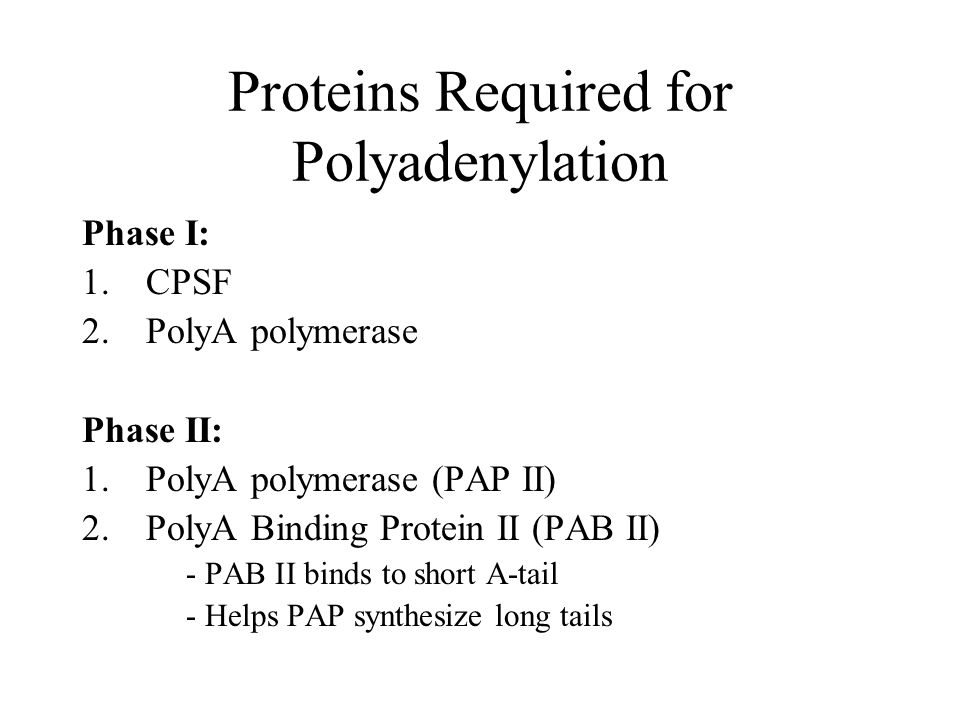 Proteins Required for Polyadenylation Phase I: 1.CPSF 2.PolyA polymerase Phase II: 1.PolyA polymerase (PAP II) 2.PolyA Binding Protein II (PAB II) - PAB II binds to short A-tail - Helps PAP synthesize long tails