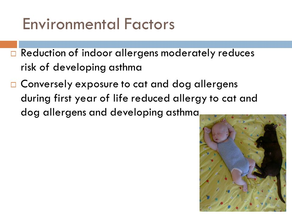 Environmental Factors  Reduction of indoor allergens moderately reduces risk of developing asthma  Conversely exposure to cat and dog allergens during first year of life reduced allergy to cat and dog allergens and developing asthma