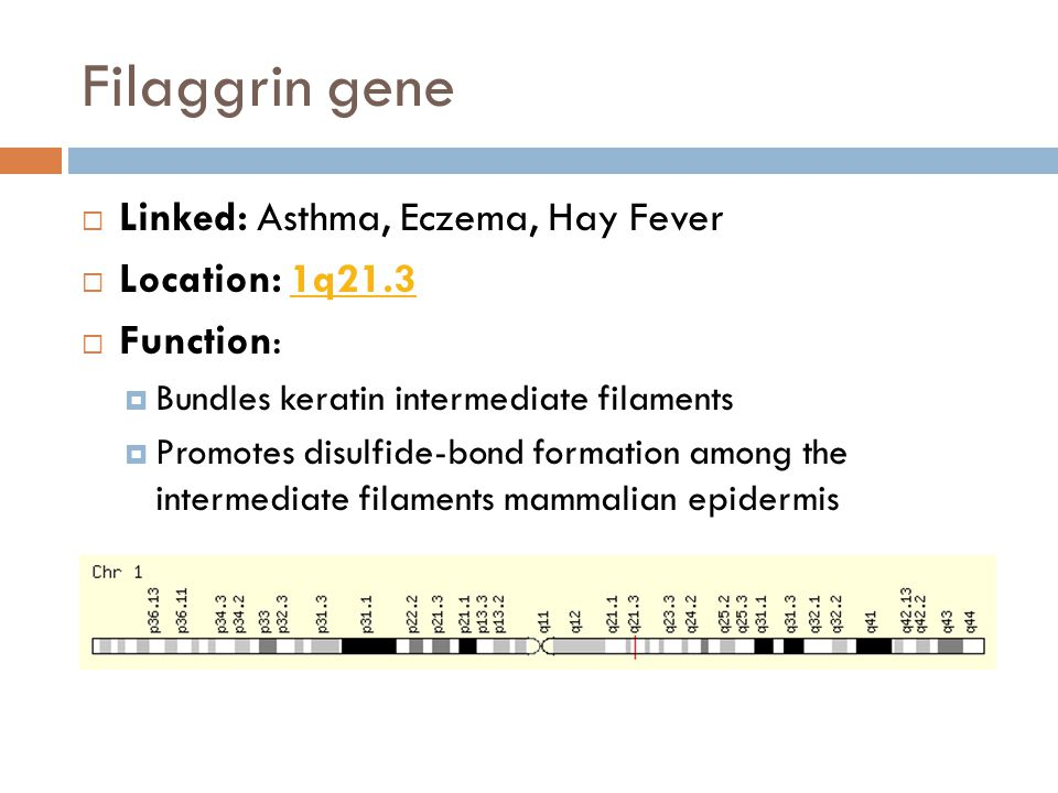 Filaggrin gene  Linked: Asthma, Eczema, Hay Fever  Location: 1q21.31q21.3  Function:  Bundles keratin intermediate filaments  Promotes disulfide-bond formation among the intermediate filaments mammalian epidermis