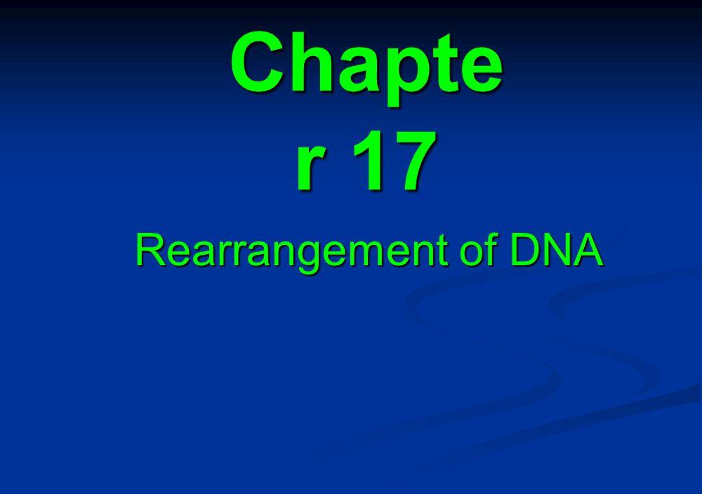 Chapte r 17 Rearrangement of DNA