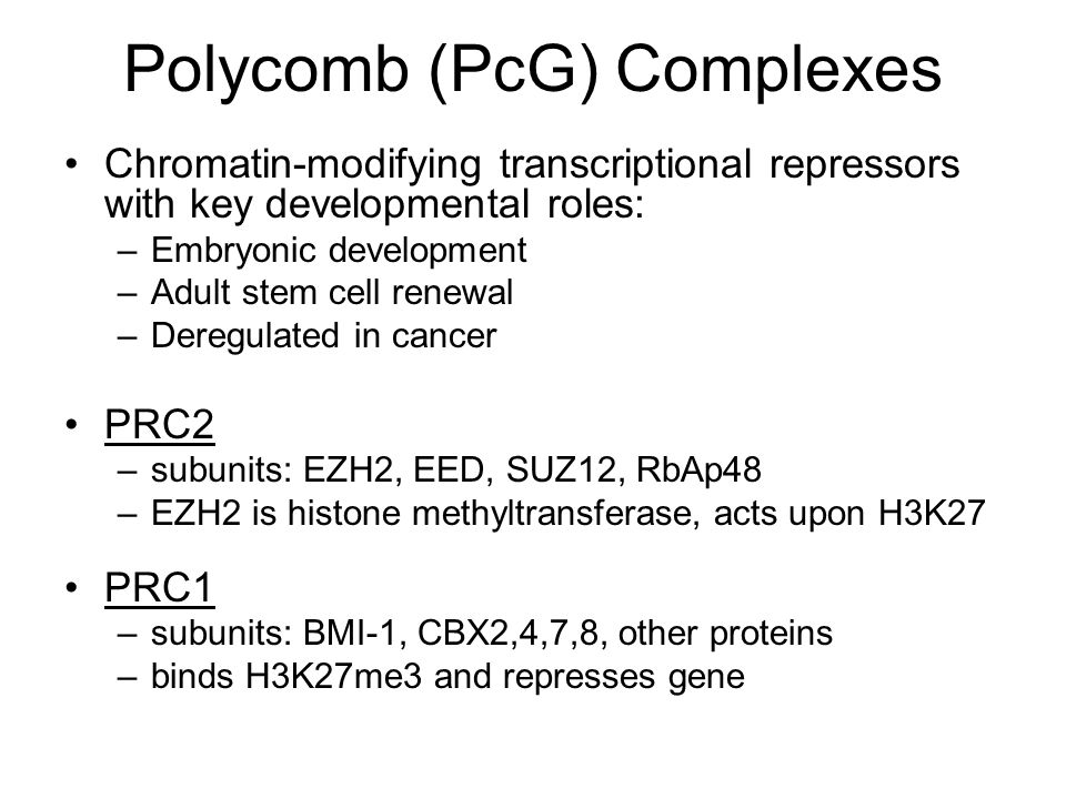 Polycomb (PcG) Complexes Chromatin-modifying transcriptional repressors with key developmental roles: –Embryonic development –Adult stem cell renewal –Deregulated in cancer PRC2 –subunits: EZH2, EED, SUZ12, RbAp48 –EZH2 is histone methyltransferase, acts upon H3K27 PRC1 –subunits: BMI-1, CBX2,4,7,8, other proteins –binds H3K27me3 and represses gene