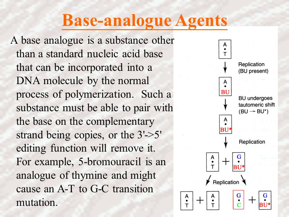 Base-analogue Agents A base analogue is a substance other than a standard nucleic acid base that can be incorporated into a DNA molecule by the normal
