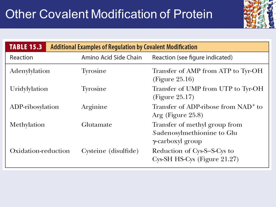 Other Covalent Modification of Protein