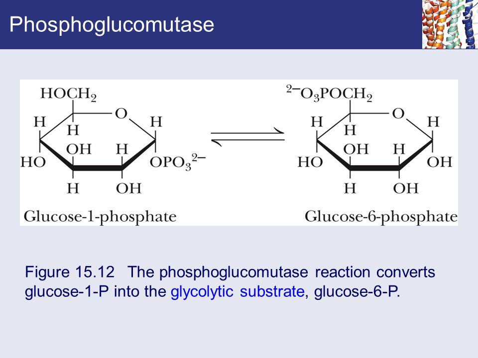 Phosphoglucomutase Figure 15.12 The phosphoglucomutase reaction converts glucose-1-P into the glycolytic substrate, glucose-6-P.