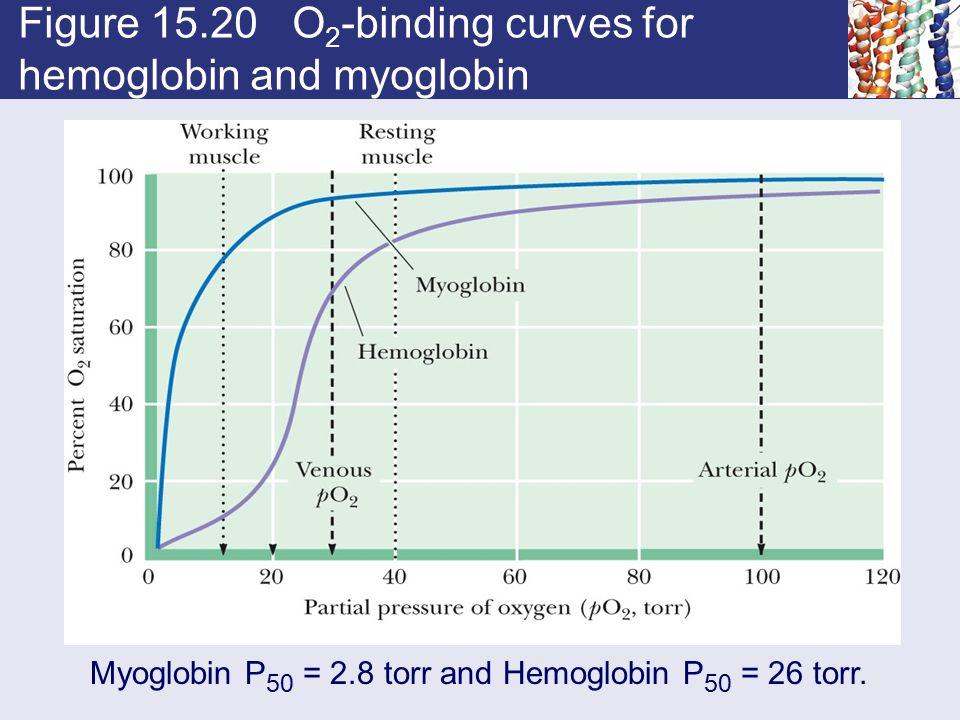 Figure 15.20 O 2 -binding curves for hemoglobin and myoglobin Myoglobin P 50 = 2.8 torr and Hemoglobin P 50 = 26 torr.