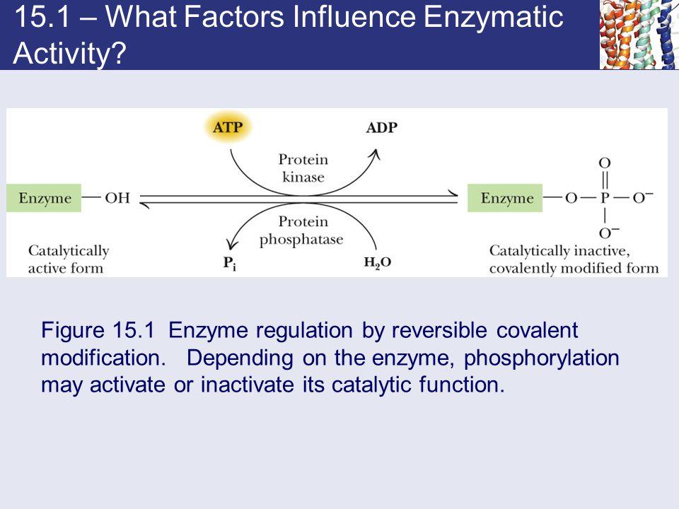 15.1 – What Factors Influence Enzymatic Activity.