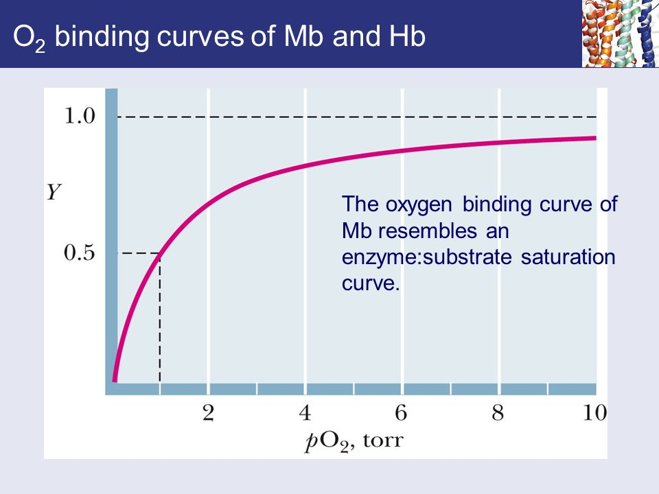 O 2 binding curves of Mb and Hb The oxygen binding curve of Mb resembles an enzyme:substrate saturation curve.