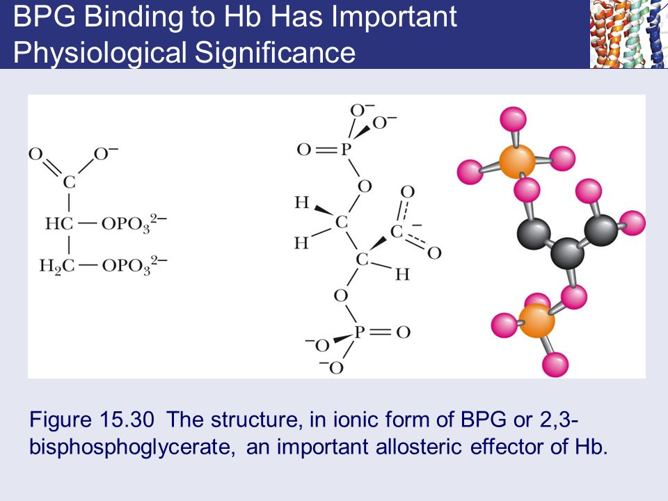 BPG Binding to Hb Has Important Physiological Significance Figure 15.30 The structure, in ionic form of BPG or 2,3- bisphosphoglycerate, an important