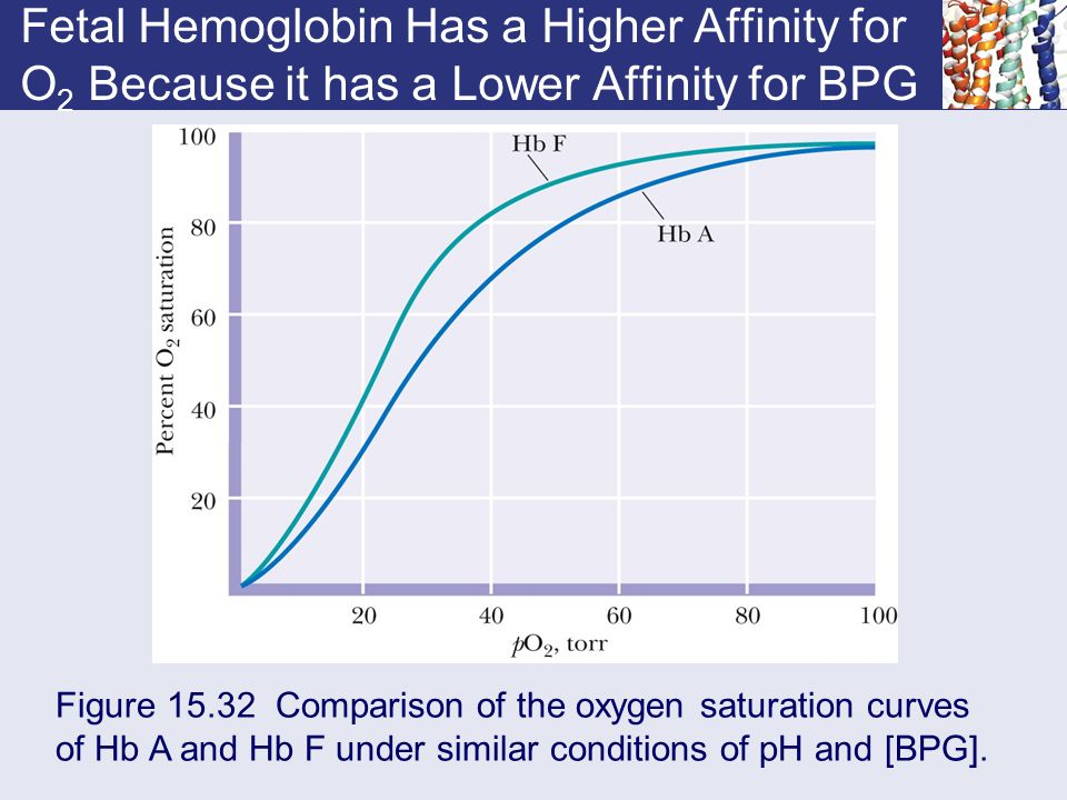 Fetal Hemoglobin Has a Higher Affinity for O 2 Because it has a Lower Affinity for BPG Figure 15.32 Comparison of the oxygen saturation curves of Hb A