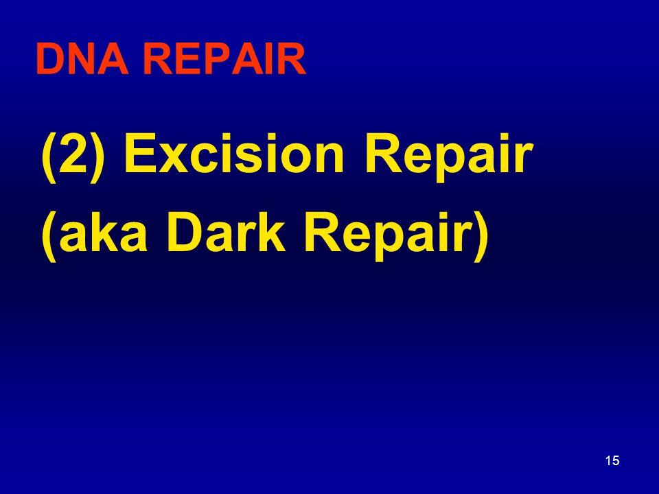 16 Excision Repair (Dark Repair) 3 different types of repair mechanisms use different enzymes (a) AP Repair (Base Excision Repair, BER) (b) UV Damage Repair (also called NER - nucleotide excision repair) (c) Mismatch Repair (MMR)