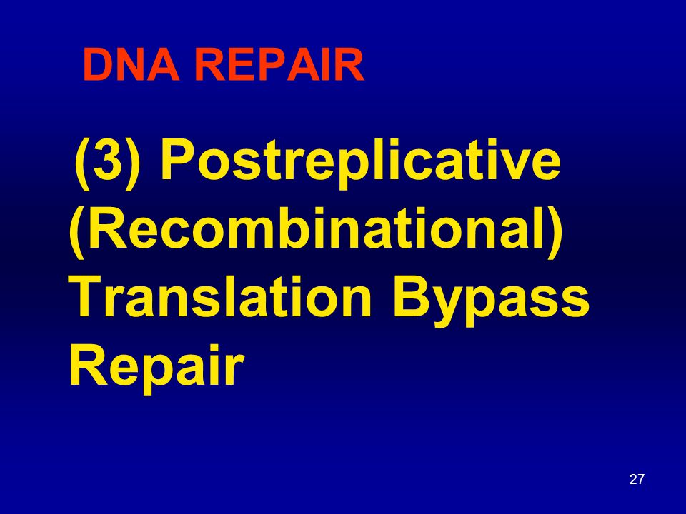 28 SOS response If T dimer is not repaired DNA Pol III can t make complementary strand during replication leaves large gap (800 bases) Gap may be repaired by enzymes in recombination system RecA - coats ssDNA it also acts as autocatalysis of LexA repressor recA mutants - very UV-sensitive Now have sister-strand exchange - a type of recombination Translation bypass Postreplicative repair is part of SOS response