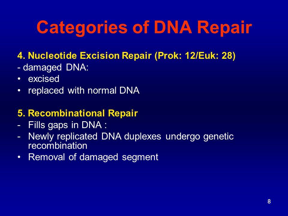9 DNA REPAIR (1) Photoreactivation (aka Light Repair)