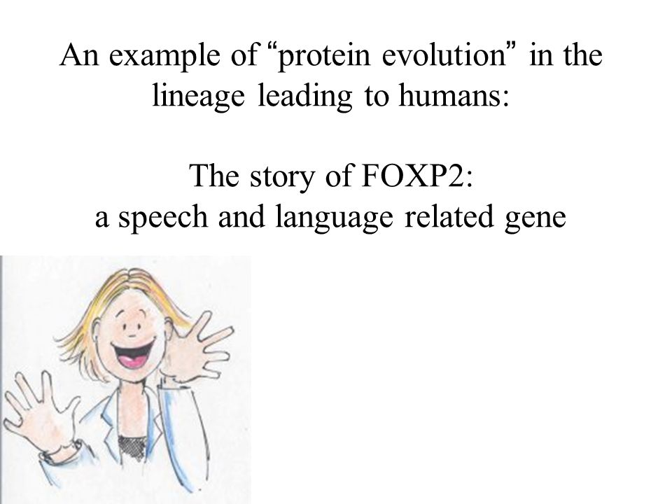 An example of protein evolution in the lineage leading to humans: The story of FOXP2: a speech and language related gene