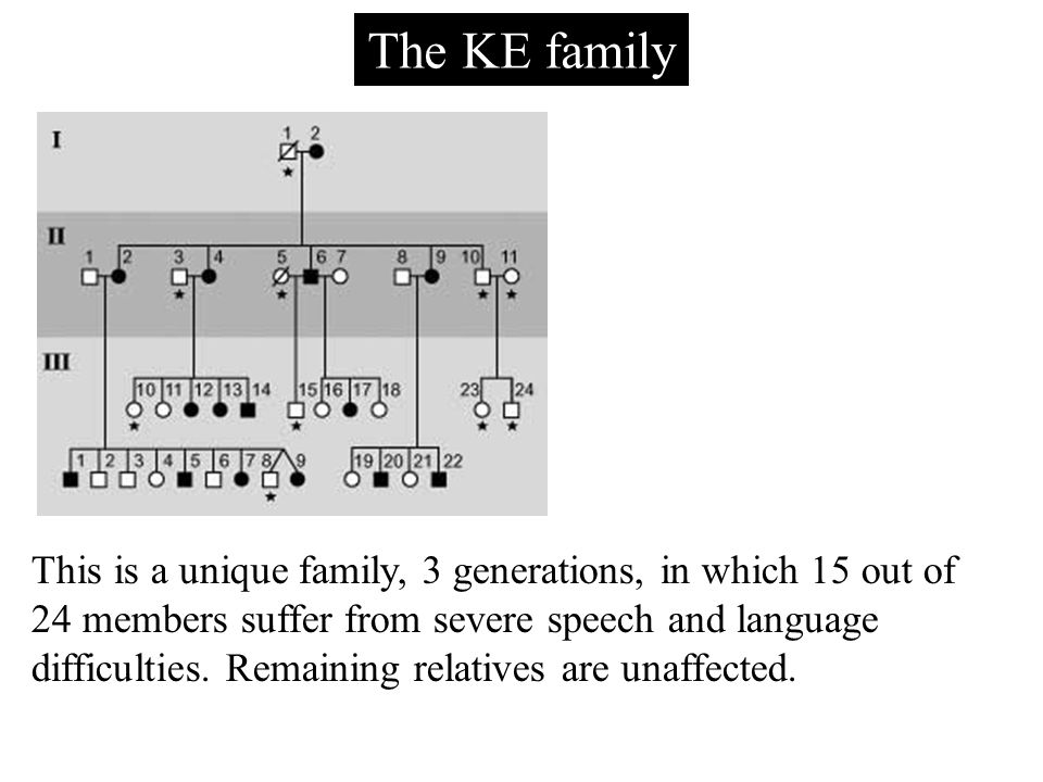 The KE family This is a unique family, 3 generations, in which 15 out of 24 members suffer from severe speech and language difficulties.