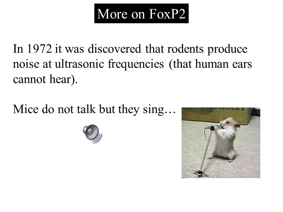 More on FoxP2 In 1972 it was discovered that rodents produce noise at ultrasonic frequencies (that human ears cannot hear).