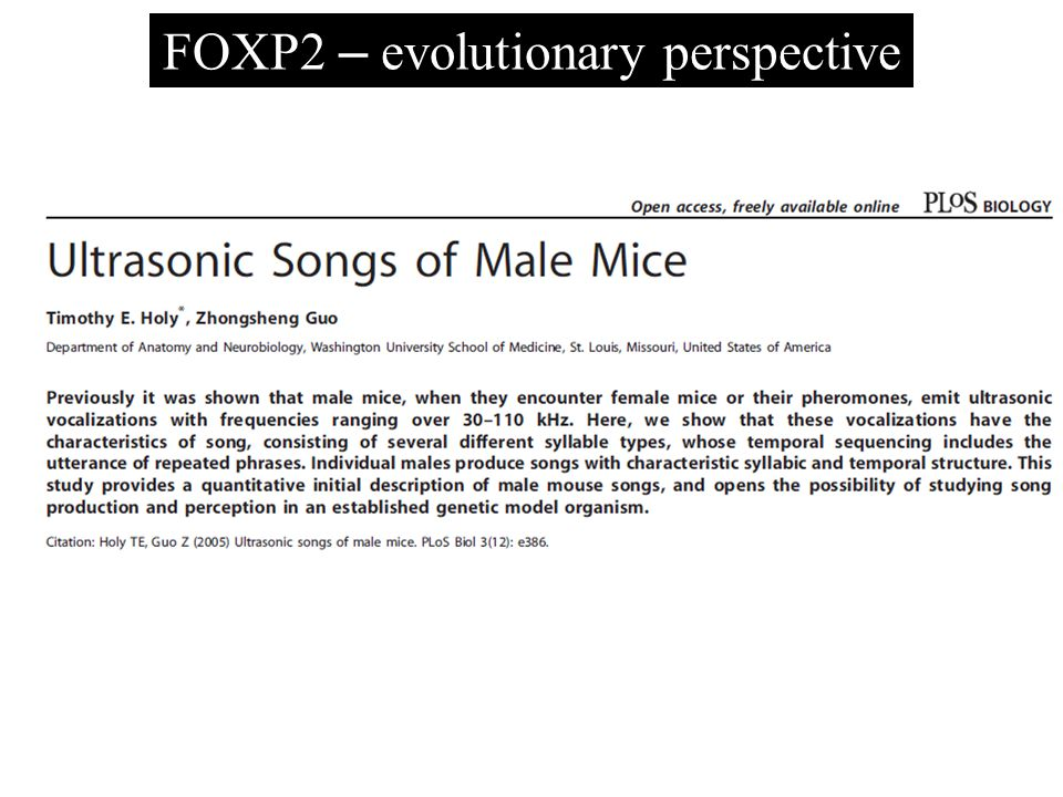 FOXP2 – evolutionary perspective