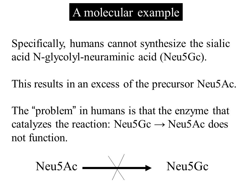A molecular example Specifically, humans cannot synthesize the sialic acid N-glycolyl-neuraminic acid (Neu5Gc). This results in an excess of the precu