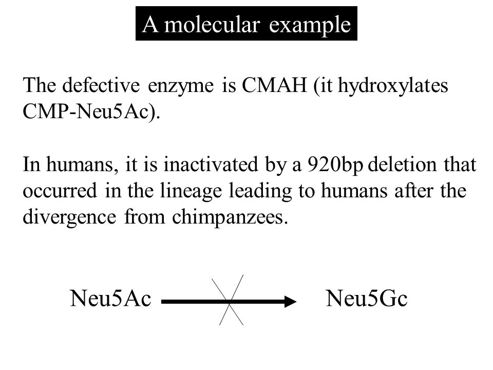 A molecular example The defective enzyme is CMAH (it hydroxylates CMP-Neu5Ac).