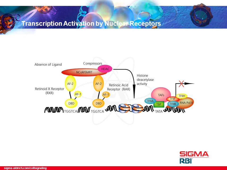 sigma-aldrich.com/cellsignaling Transcription Activation by Nuclear Receptors