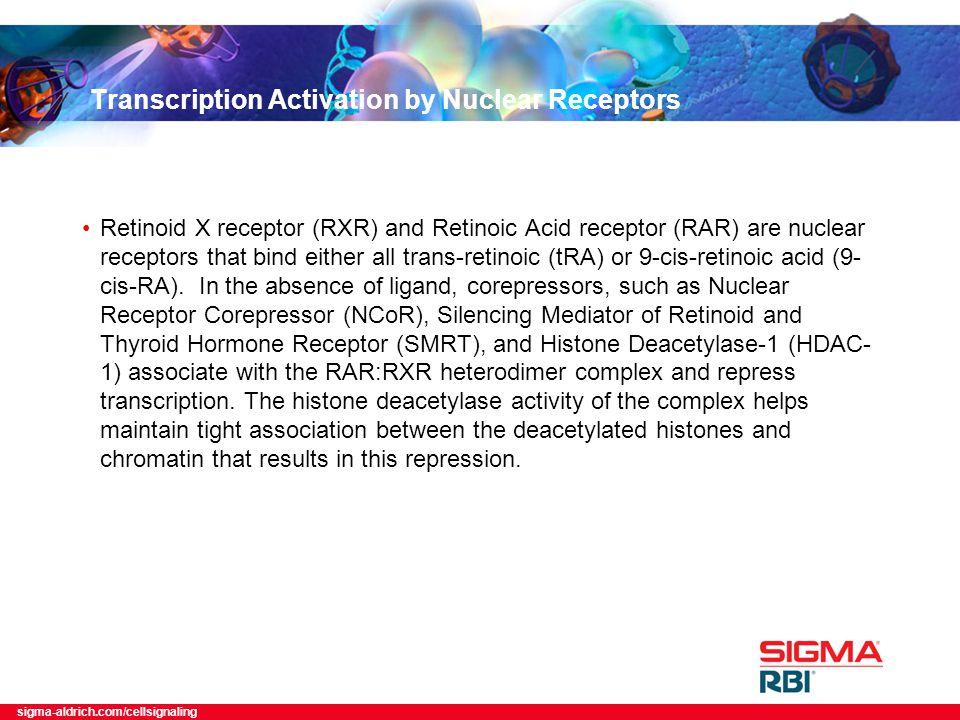 sigma-aldrich.com/cellsignaling Transcription Activation by Nuclear Receptors Retinoid X receptor (RXR) and Retinoic Acid receptor (RAR) are nuclear receptors that bind either all trans-retinoic (tRA) or 9-cis-retinoic acid (9- cis-RA).