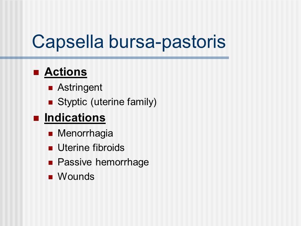 Capsella bursa-pastoris Actions Astringent Styptic (uterine family) Indications Menorrhagia Uterine fibroids Passive hemorrhage Wounds