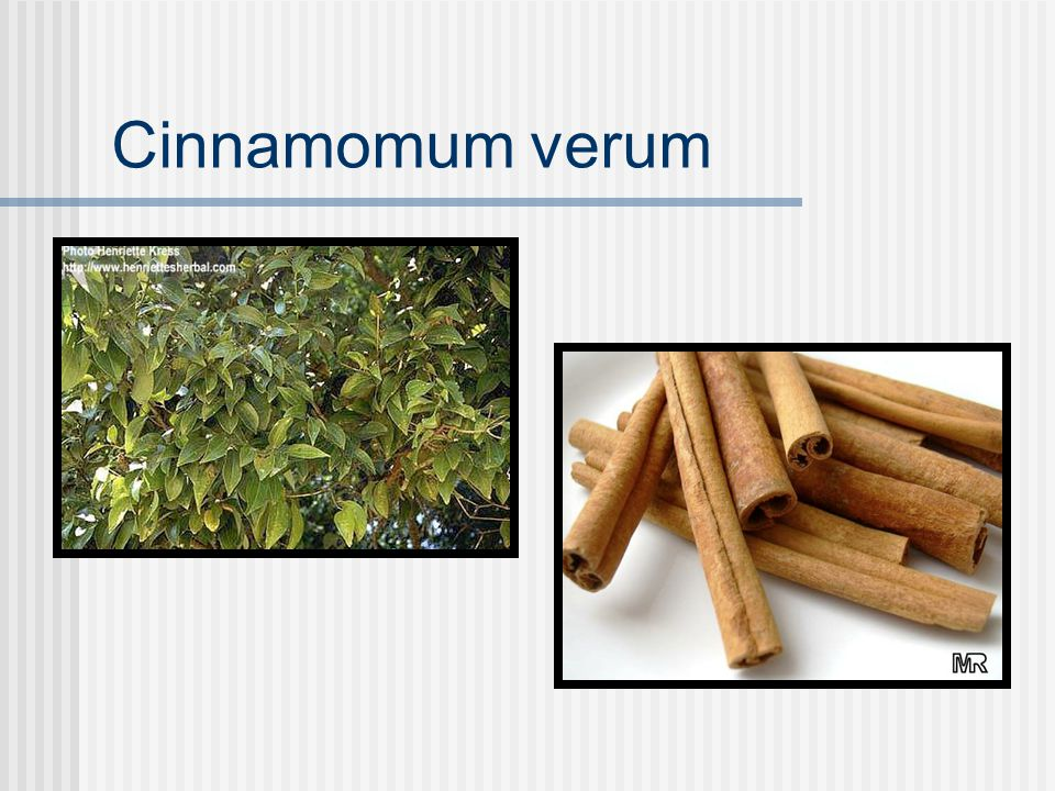 Cinnamon Lauraceae family Constituents Volatile oils (cinnmaldehyde and eugenol) Tannins Coumarins Mucilage