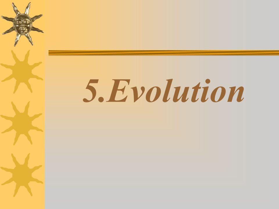 5.Evolution