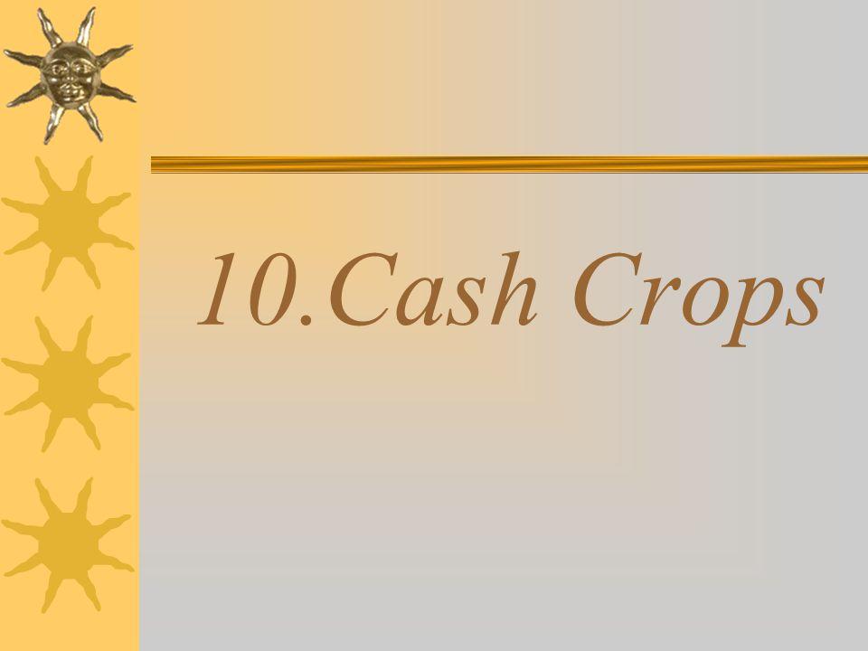 10.Cash Crops