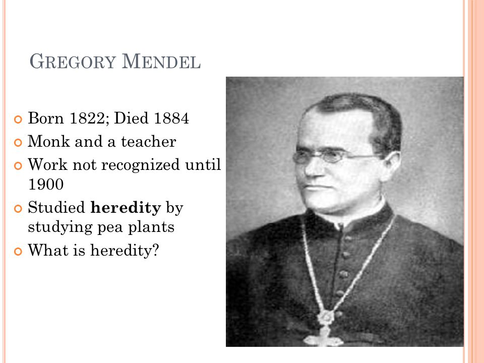 G REGORY M ENDEL Born 1822; Died 1884 Monk and a teacher Work not recognized until 1900 Studied heredity by studying pea plants What is heredity?
