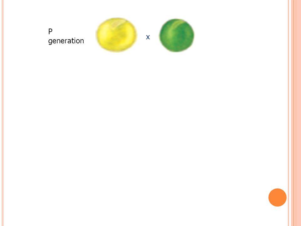 x P generation