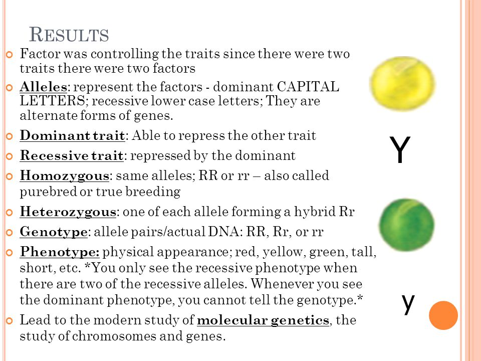 R ESULTS Factor was controlling the traits since there were two traits there were two factors Alleles : represent the factors - dominant CAPITAL LETTERS; recessive lower case letters; They are alternate forms of genes.