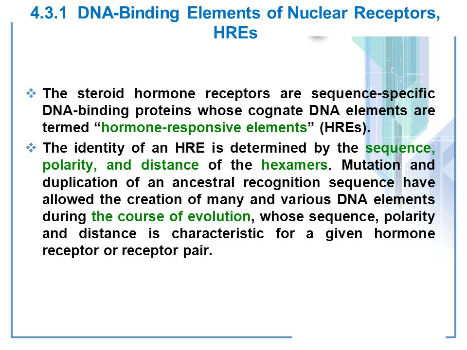 4.3.1 DNA-Binding Elements of Nuclear Receptors, HREs  The steroid hormone receptors are sequence-specific DNA-binding proteins whose cognate DNA elements are termed hormone-responsive elements (HREs).