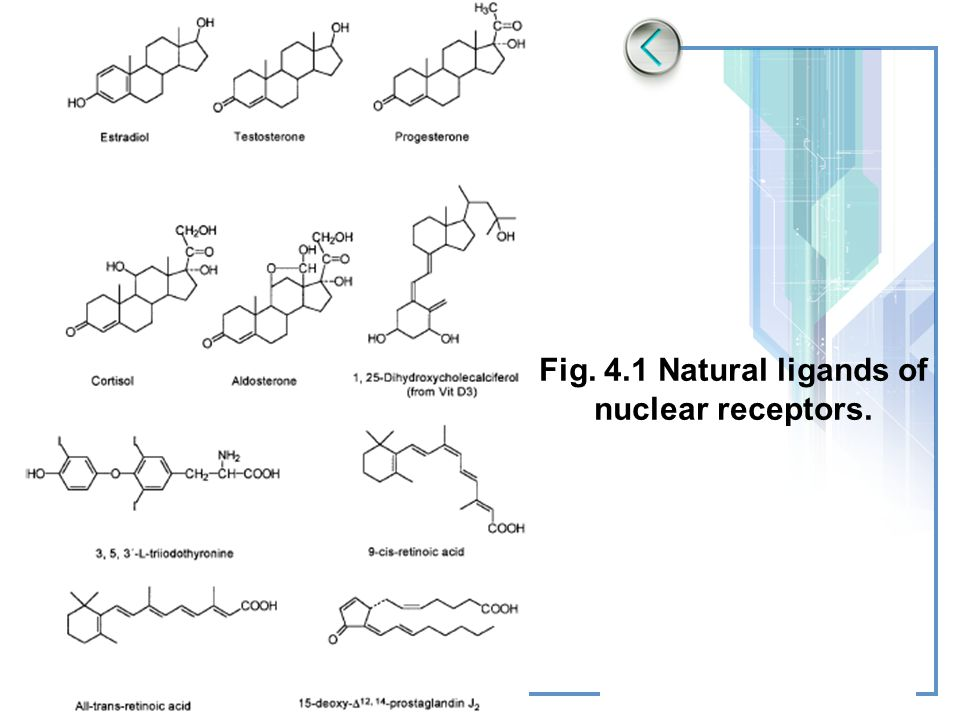 Fig. 4.1 Natural ligands of nuclear receptors.