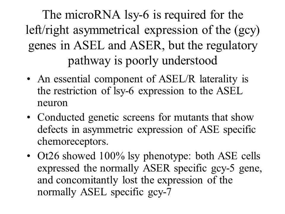 The microRNA lsy-6 is required for the left/right asymmetrical expression of the (gcy) genes in ASEL and ASER, but the regulatory pathway is poorly understood An essential component of ASEL/R laterality is the restriction of lsy-6 expression to the ASEL neuron Conducted genetic screens for mutants that show defects in asymmetric expression of ASE specific chemoreceptors.