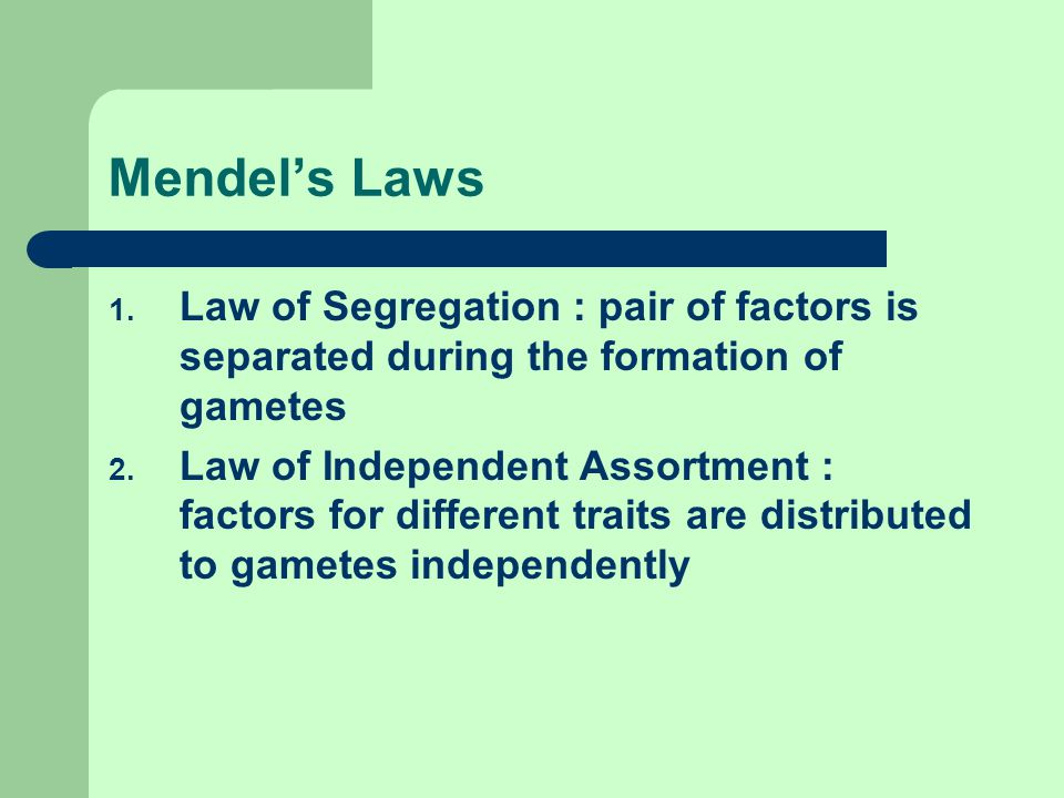 Mendel's Laws 1. Law of Segregation : pair of factors is separated during the formation of gametes 2. Law of Independent Assortment : factors for diff